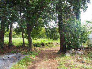 大きな栗の木パブリック栗畑入り口