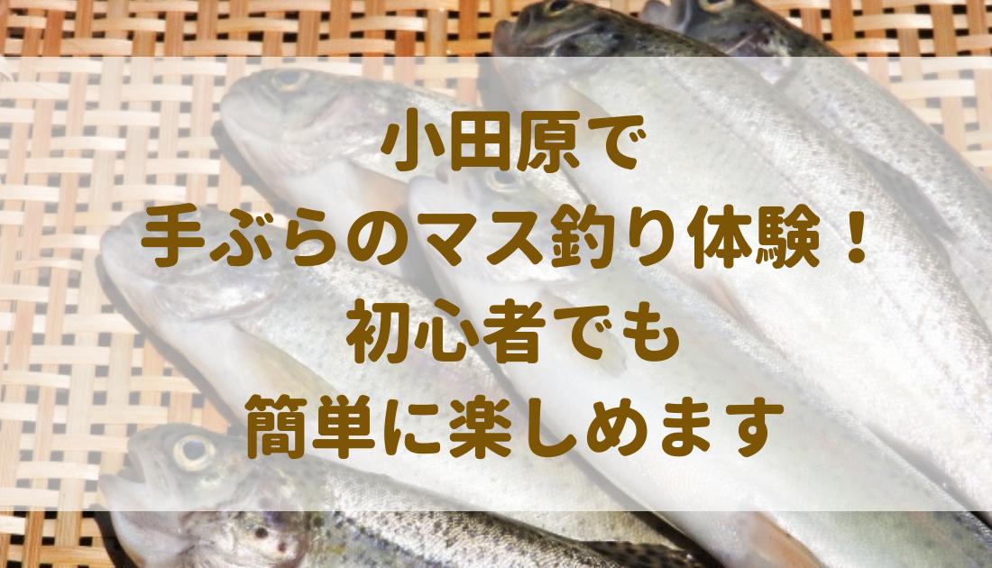 小田原で 手ぶらのマス釣り体験! 初心者でも 簡単に楽しめます